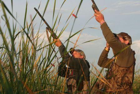 Особенности охоты на уток в камышах.